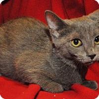 Adopt A Pet :: Delilah - Garland, TX