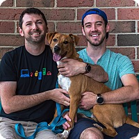 Adopt A Pet :: Jasper - Adopted 08/28/2016 - Livonia, MI