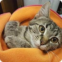 Adopt A Pet :: Calypso - Littleton, CO