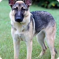 Adopt A Pet :: Rey - Waldorf, MD