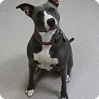 Adopt A Pet :: Vicky - Manitowoc, WI