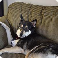 Husky/German Shepherd Dog Mix Dog for adoption in Warren, Michigan - Mitzy -needs new home ASAP