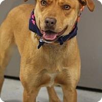 Adopt A Pet :: Vinnie - Lebanon, ME