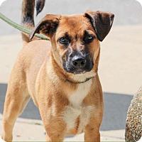 Adopt A Pet :: Otis - Indianapolis, IN