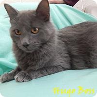 Adopt A Pet :: Hugo Boss - Bucyrus, OH