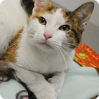 Adopt A Pet :: Amity - Springfield, IL