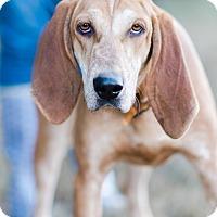 Adopt A Pet :: Happy $125 - Seneca, SC