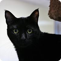 Adopt A Pet :: Bruce - Toms River, NJ