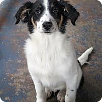 Adopt A Pet :: Fletch - Albany, NY