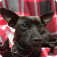 Adopt A Pet :: Bentley - Tehachapi, CA
