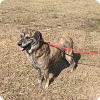 Adopt A Pet :: Jazzy - Charlotte, NC