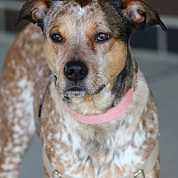 Adopt A Pet :: Roux - Lafayette, IN