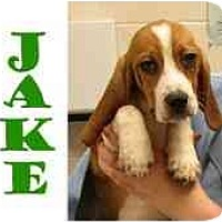 Adopt A Pet :: Jake - Pembroke Pines, FL