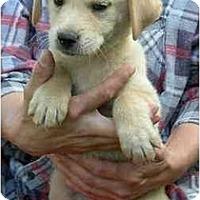 Adopt A Pet :: Remmy - Cumming, GA