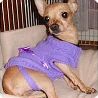 Adopt A Pet :: Catie - Mooy, AL