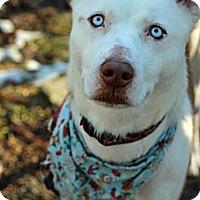 Adopt A Pet :: Libra - Tinton Falls, NJ