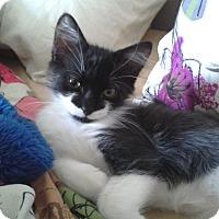 Adopt A Pet :: BUBBA - 2014 - Hamilton, NJ