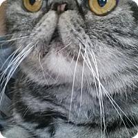 Adopt A Pet :: Duncan - Beverly Hills, CA