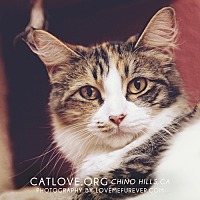 Adopt A Pet :: Corinne - Chino Hills, CA