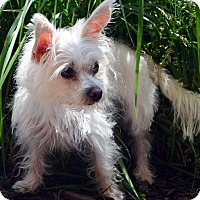 Adopt A Pet :: Minnie - Bridgeton, MO