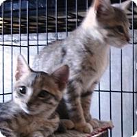 Adopt A Pet :: Moonbeam & Twilight - Orange, CA