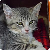 Adopt A Pet :: Minnie - Island Park, NY