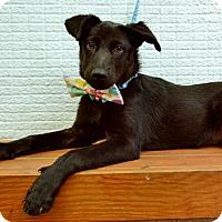 Adopt A Pet :: Calvin - Surrey, BC