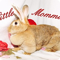 Adopt A Pet :: Little Momma - Elizabethtown, KY