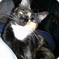 Adopt A Pet :: Sassafras - Macomb, IL