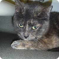 Adopt A Pet :: Megan - Hamburg, NY