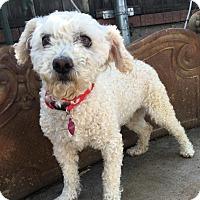 Adopt A Pet :: Khloe - Santa Ana, CA