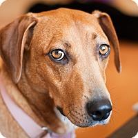 Adopt A Pet :: Alphys - Frederick, MD
