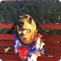 Adopt A Pet :: Benny - Marcellus, MI