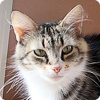 Domestic Longhair Cat for adoption in Morganton, North Carolina - Fiona
