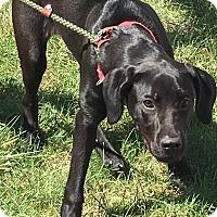 Adopt A Pet :: Jace - Zanesville, OH