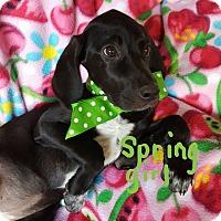 Adopt A Pet :: Spring - Hopkinton, MA