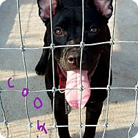 Adopt A Pet :: Cookie - Lawrenceburg, TN