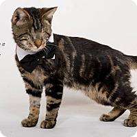 Adopt A Pet :: Ron - Riverside, CA