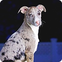 Adopt A Pet :: Kingsbury - Cincinnati, OH