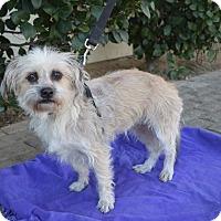 Adopt A Pet :: Suri - Lodi, CA