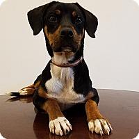 Adopt A Pet :: CiCi - Elyria, OH