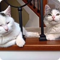 Adopt A Pet :: Jack & Jill - Pleasant Plain, OH