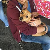 Adopt A Pet :: Daisy - Melrose, FL