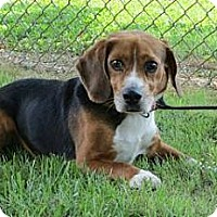 Adopt A Pet :: Dodge Henderson - Waldorf, MD