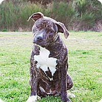 Adopt A Pet :: MAGGIE - Kingston, WA