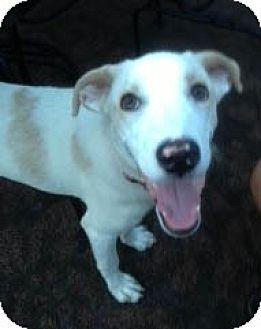 Labrador Retriever Mix Dog for adoption in Rye Brook, New York - Tyler