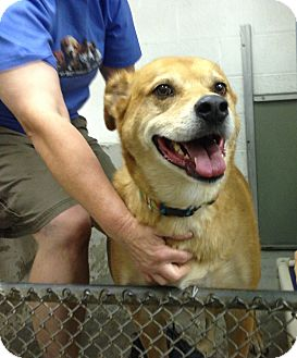 Labrador Retriever Mix Dog for adoption in Beacon, New York - Miles