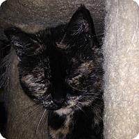 Adopt A Pet :: Jenny - Kelso/Longview, WA