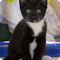 Adopt A Pet :: Sahar - Monroe, GA