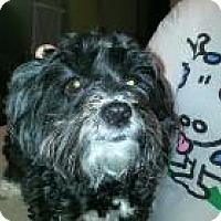 Adopt A Pet :: Harley - LEXINGTON, KY